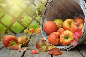 りんご食物繊維の質